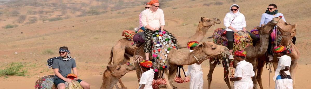 верблюд-сафари